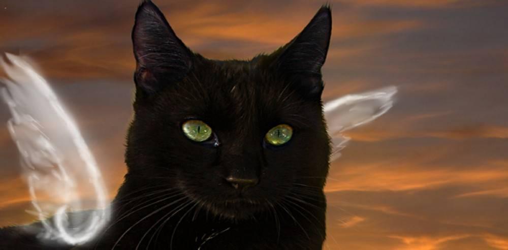Il mio amato gatto nero
