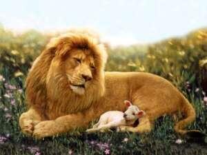 Gesù e gli animali