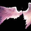 Quando gli Animali diventano messaggeri Angelici -Le vostre testimonianze