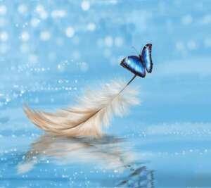 Piuma e Farfalle