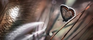 Messaggi Angelici cuori farfalle piume nuvole