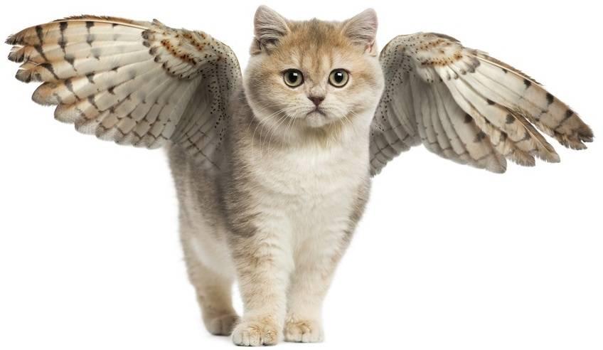 DEDICATO A TE DAL TUO ANIMALE IN PARADISO