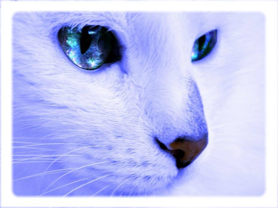 STORIE DI ANIMALI TORNATI DALL'ALDILA'