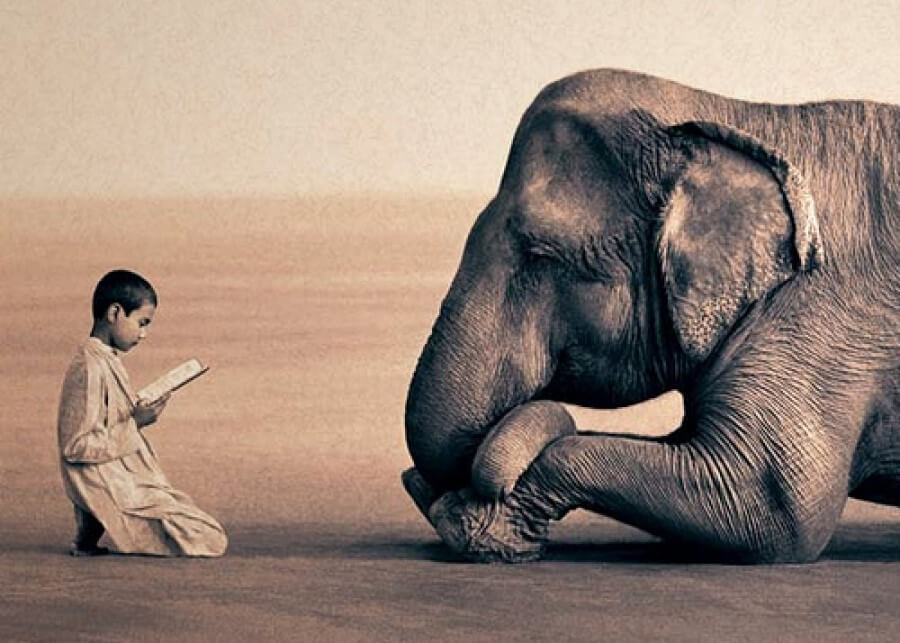 Animali toccati dagli Angeli