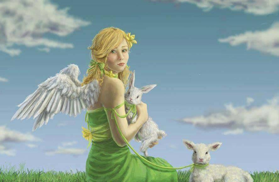 Anche gli animali vanno in paradiso - testimonianze